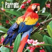 Parrots 2018 12 x 12 Inch Square Wall Calendar