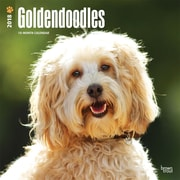 Goldendoodles 2018 12 x 12 Inch Square Wall Calendar