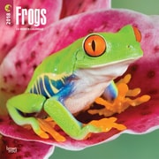 Frogs 2018 12 x 12 Inch Square Wall Calendar