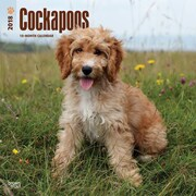 Cockapoos 2018 12 x 12 Inch Square Wall Calendar