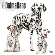 Dalmatians 2018 12 x 12 Inch Square Wall Calendar