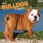 Bulldog Puppies 2018 12 x 12 Inch Square Wall Calendar