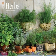 Herbs 2018 12 x 12 Inch Monthly Square Wall Calendar
