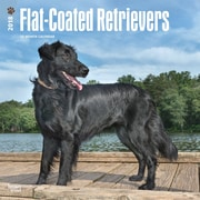 Flat Coated Retrievers 2018 12 x 12 Inch Square Wall Calendar
