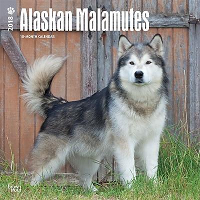 Alaskan Malamutes 2018 12 x 12 Inch Square Wall Calendar