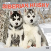 Siberian Husky Puppies 2018 12 x 12 Inch Square Wall Calendar