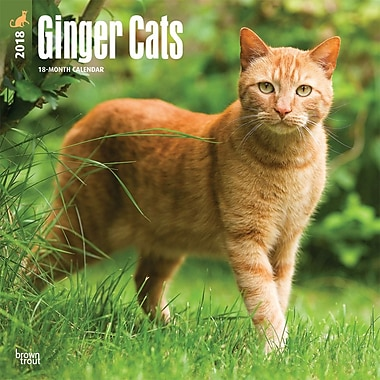 Ginger Cats 2018 12 x 12 Inch Square Wall Calendar