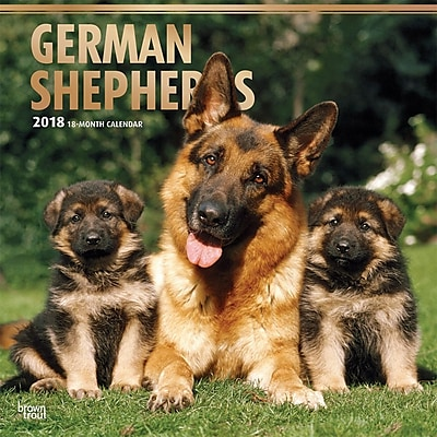 German Shepherds 2018 12 x 12 Inch Square Wall Calendar with Foil Stamped Cover