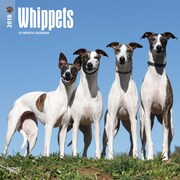 Whippets 2018 12 x 12 Inch Square Wall Calendar