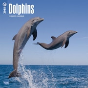 Dolphins 2018 12 x 12 Inch Square Wall Calendar