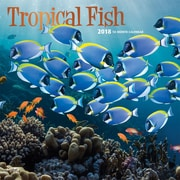 Tropical Fish 2018 12 x 12 Inch Square Wall Calendar with Foil Stamped Cover