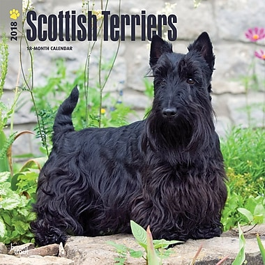 Scottish Terriers 2018 12 x 12 Inch Square Wall Calendar