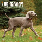 Weimaraners 2018 12 x 12 Inch Square Wall Calendar