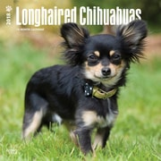 Longhaired Chihuahuas 2018 12 x 12 Inch Square Wall Calendar