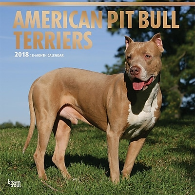 American Pit Bull Terriers 2018 12 x 12 Inch Square Wall Calendar with Foil Stamped Cover