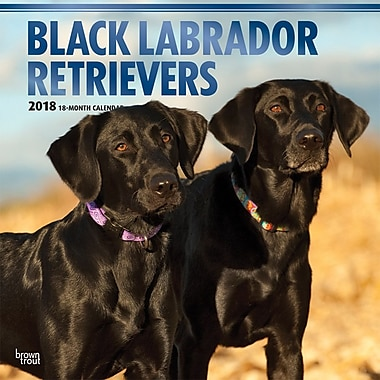Black Labrador Retrievers 2018 12 x 12 Inch Square Wall Calendar with Foil Stamped Cover