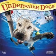 Underwater Dogs 2018 12 x 12 Inch Monthly Square Wall Calendar