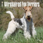 Wirehaired Fox Terriers 2018 12 x 12 Inch Square Wall Calendar