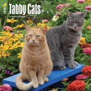 Tabby Cats 2018 12 x 12 Inch Square Wall Calendar