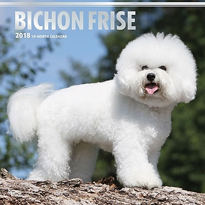 Bichon Frise 2018 12 x 12 Inch Square Wall Calendar with Foil Stamped Cover