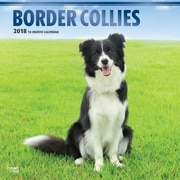 Border Collies 2018 12 x 12 Inch Square Wall Calendar with Foil Stamped Cover