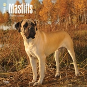 Mastiffs 2018 12 x 12 Inch Square Wall Calendar