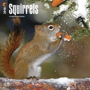Squirrels 2018 12 x 12 Inch Square Wall Calendar