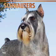 Schnauzers 2018 12 x 12 Inch Square Wall Calendar with Foil Stamped Cover