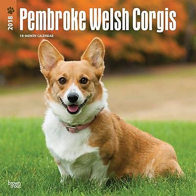 Pembroke Welsh Corgis 2018 12 x 12 Inch Square Wall Calendar