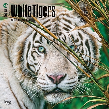 White Tigers 2018 12 x 12 Inch Square Wall Calendar