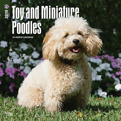 Toy and Miniature Poodles 2018 12 x 12 Inch Square Wall Calendar