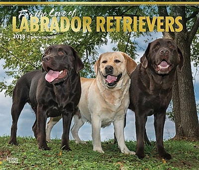 For the Love of Labrador Retrievers 2018 Deluxe Wall Calendar with Foil Stamped Cover