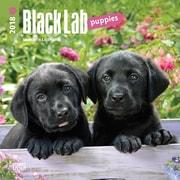 Black Labrador Retriever Puppies 2018 Mini 7 x 7 Inch Wall Calendar