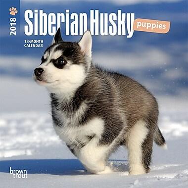 Siberian Husky Puppies 2018 Mini 7 x 7 Inch Wall Calendar
