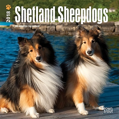 Shetland Sheepdogs 2018 Mini 7 x 7 Inch Wall Calendar
