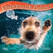 Underwater Puppies 2018 7 x 7 Inch Monthly Mini Wall Calendar