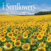 Sunflowers 2018 7 x 7 Inch Monthly Mini Wall Calendar