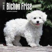 Bichon Frise Puppies 2018 Mini 7 x 7 Inch Wall Calendar