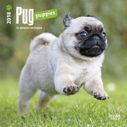 Pug Puppies 2018 Mini 7 x 7 Inch Wall Calendar