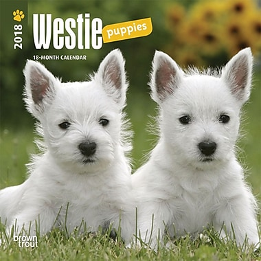 West Highland White Terrier Puppies 2018 Mini 7 x 7 Inch Wall Calendar