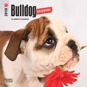 Bulldog Puppies 2018 Mini 7 x 7 Inch Wall Calendar