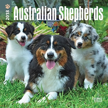 Australian Shepherds 2018 Mini 7 x 7 Inch Wall Calendar