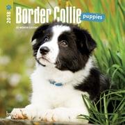 Border Collie Puppies 2018 Mini 7 x 7 Inch Wall Calendar