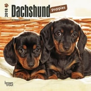 Dachshund Puppies 2018 Mini 7 x 7 Inch Wall Calendar