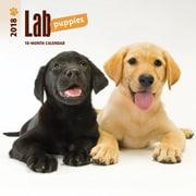 Lab Puppies 2018 Mini 7 x 7 Inch Wall Calendar