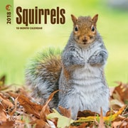 Squirrels 2018 Mini 7 x 7 Inch Wall Calendar