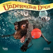 Underwater Dogs 2018 7 x 7 Inch Monthly Mini Wall Calendar