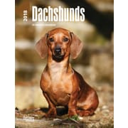 Dachshunds 2018 Engagement Calendar