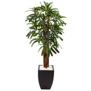 Nearly Natural 5.5'H Raphis Palm Tree in Black Planter (5982)