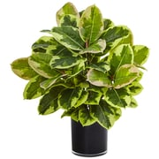 Nearly Natural Rubber Plant in Glossy Cylinder (Real Touch) (6952)